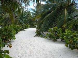 island-path-1024x768