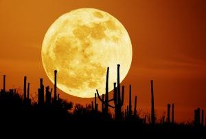 Harvest-Moon